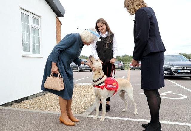 The Duchess of Cornwall meets Storm, a Labrador Golden Retriever cross, during her visit to the Medical Detection Dogs charity's training centre