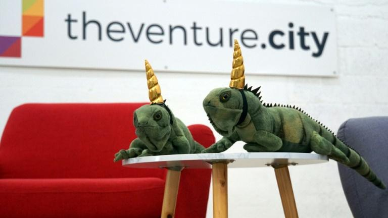 "Stuffed ""iguanacorns"" decorate TheVentureCity office in Miami. Tech insiders came up with the concept to describe startup ""unicorns"" that are growing in Miami (AFP Photo/Gianrigo MARLETTA)"