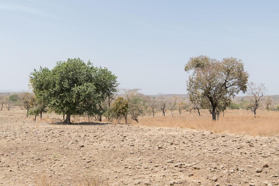 Degraded forest and land in West Gonder, Ethiopia (Maheder Haileselassie/Tree Aid/PA)