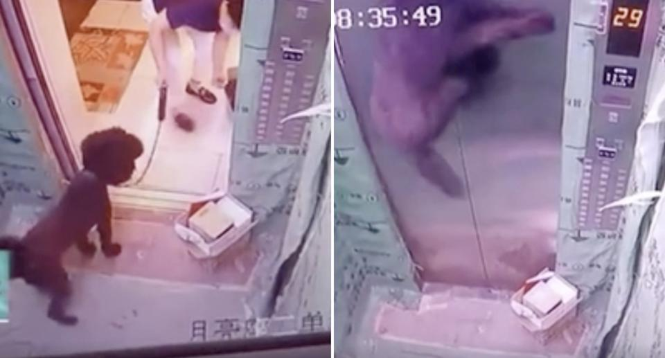A dog, stuck in a Handan elevator shaft in China, gets pulled on its lead as the elevator moves.