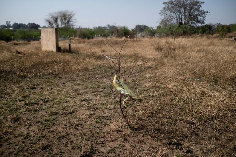 Fewer than two out of 10 murders are solved in South Africa (AFP/WIKUS DE WET)