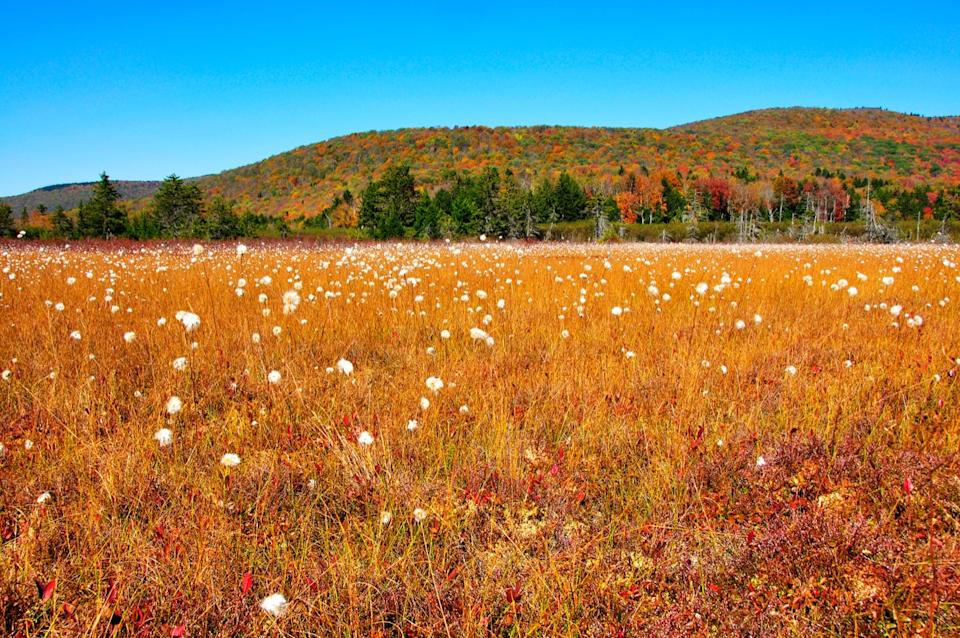 cranberry glades west virginia state natural wonders