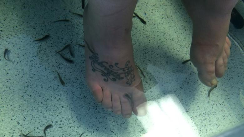 Controversial 'fish pedicures' now offered in Gander