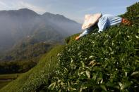 The Wider Image: Climate-fuelled drought forces Taiwan tea farmer in search of water