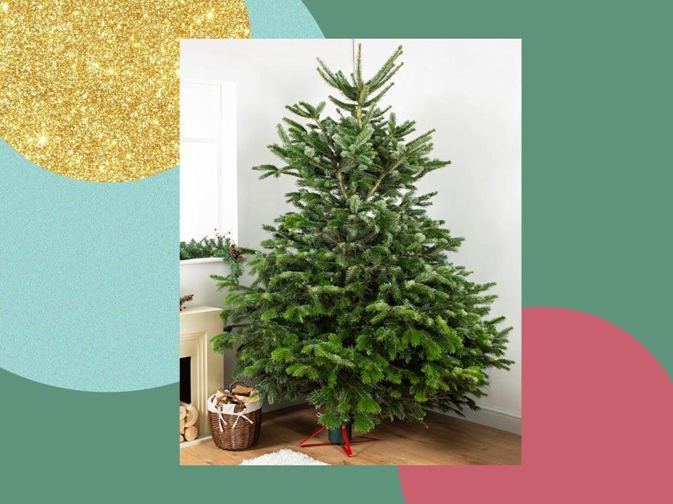 Bear in mind that it doesn't just have to support your super-sized spruce, but all the decorations you'll be loading it with too (iStock/The Independent )