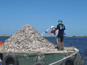 This June 29, 2021 photo shows workers on a barge laden with 680 bushels of clam and oyster shells that are about to be dumped into the Mullica River in Port Republic, N.J. The shells are collected from restaurants in Atlantic City, dried, and placed into the river where they become the foundation for new oyster colonies as free-floating baby oysters attach to them and start to grow. Communities around the world are running similar shell recycling programs. (AP Photo/Wayne Parry)