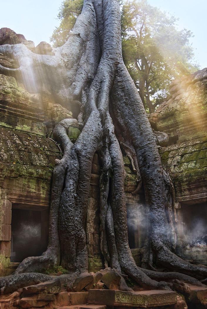 <p>This famous temple in Angkor Wat, Cambodia, was abandoned after the fall of the empire in the 17th century and—after hundreds of years of neglect—became one with the jungle. Today, the ruins are looked after in order to stabilize and maintain the temple.</p>