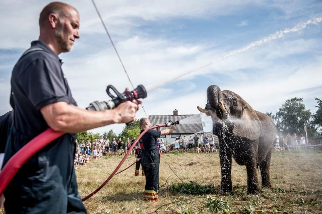 <p>Local firefighters spray water to cool down elephants of the Arene circus due to high temperatures on August 2, 2018 in Gilleleje, Denmark. (Photo: Mads Claus Rasmussen/Ritzau Scanpix/ AFP/Getty Images) </p>