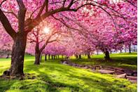 <p>Pretty public parks, like this one in Dover, New Jersey, are one of the bonuses of small town living. </p>