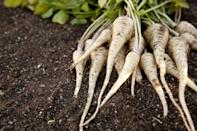 """<p>A sturdy root vegetable, parsnips are at their best from fall through early spring. You can <a href=""""https://www.thedailymeal.com/recipes/roasted-root-vegetables-lazy-vinaigrette-recipe?referrer=yahoo&category=beauty_food&include_utm=1&utm_medium=referral&utm_source=yahoo&utm_campaign=feed"""" rel=""""nofollow noopener"""" target=""""_blank"""" data-ylk=""""slk:roast them and serve them with a lazy vinaigrette"""" class=""""link rapid-noclick-resp"""">roast them and serve them with a lazy vinaigrette</a> or slice them thin with a mandolin and turn them into <a href=""""https://www.thedailymeal.com/recipes/mixed-root-veggie-chips-recipe?referrer=yahoo&category=beauty_food&include_utm=1&utm_medium=referral&utm_source=yahoo&utm_campaign=feed"""" rel=""""nofollow noopener"""" target=""""_blank"""" data-ylk=""""slk:root veggie chips"""" class=""""link rapid-noclick-resp"""">root veggie chips</a>. If you're in more of a soup mood, <a href=""""https://www.thedailymeal.com/recipes/parsnips-carrots-and-celery-root-nutmeg-recipe?referrer=yahoo&category=beauty_food&include_utm=1&utm_medium=referral&utm_source=yahoo&utm_campaign=feed"""" rel=""""nofollow noopener"""" target=""""_blank"""" data-ylk=""""slk:parsnips make a great autumn soup"""" class=""""link rapid-noclick-resp"""">parsnips make a great autumn soup</a>.</p>"""