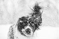 <p>There's lots of fun to be had if you're a pup who loves snow. </p>