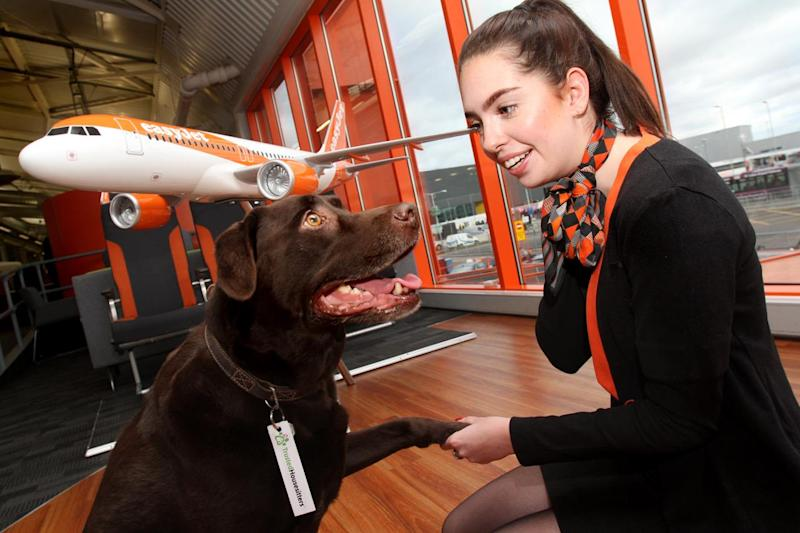 easyJet will launch its partnership with TrustedHousesitters in 2018: easyJet