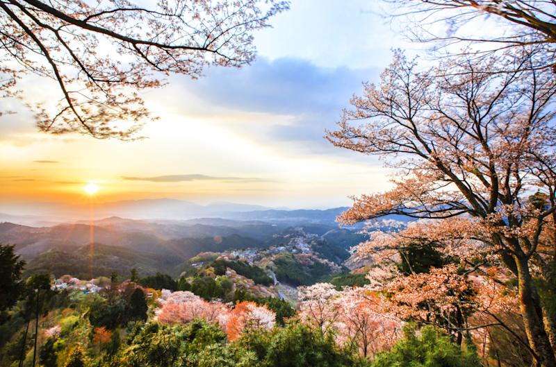 America and Japan host cherry blossom festivals and, according to the National Cherry Blossom Festival in Washington D.C., the flower is celebrated as a symbol for the friendship between Japan and the U.S.