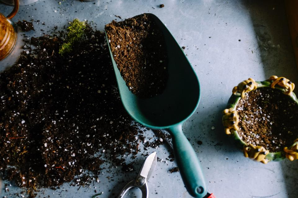 Outdoor plants, compost and seeds are among the most common gardening purchases Brit have been making. (Neslihan Gunaydin/Unsplash)