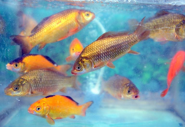 A man in the US died after taking a form of choloroquine used to clean fish tanks in the mistaken belief it would protect against the coronavirus
