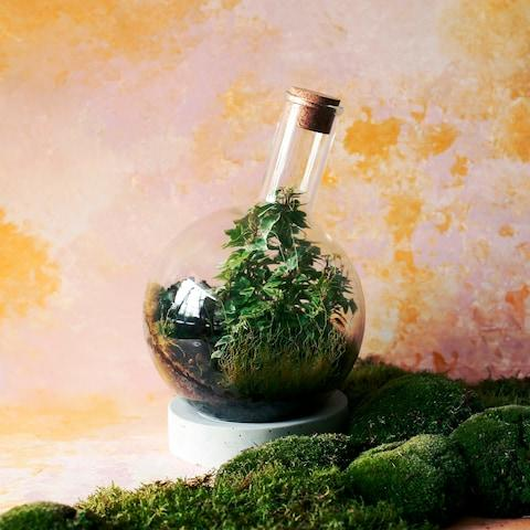 London Terrariums arrangement - Credit: London Terrariums