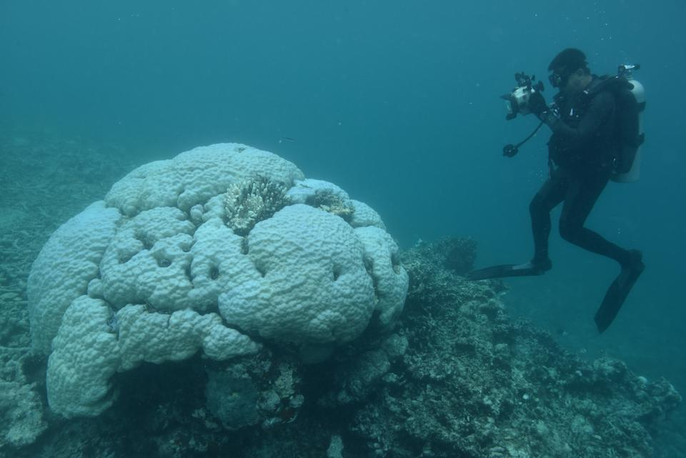 A diver in a wetsuit is photographing a large bleached coral in a blue sea.