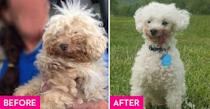 """<p><a href=""""http://www.hua.org/"""" rel=""""nofollow noopener"""" target=""""_blank"""" data-ylk=""""slk:Hearts United for Animals"""" class=""""link rapid-noclick-resp"""">Hearts United for Animals</a> rescued Blueberry after he spent six years in a puppy mill. He was living in South Dakota where he lost all of his teeth and suffered brain damage from seizures. Rather than dwell on the negative, his forever family says that his brain damage has actually made him a happier dog because he's usually oblivious to things happening around him but never the love that he receives. </p>"""
