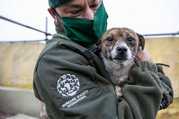 PHOTO: Adam Parascandola, Vice President of Global Animal Rescue and Response of HSI, holds a dog at a dog meat farm in Haemi, South Korea, on Wednesday, October 21, 2020.  (Jean Chung/For HSI)
