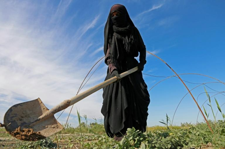 A female Iraqi farmer digs with a shovel in a field in Diwaniyah, around 160 kilometres (100 miles) south of the capital Baghdad, on April 2, 2018