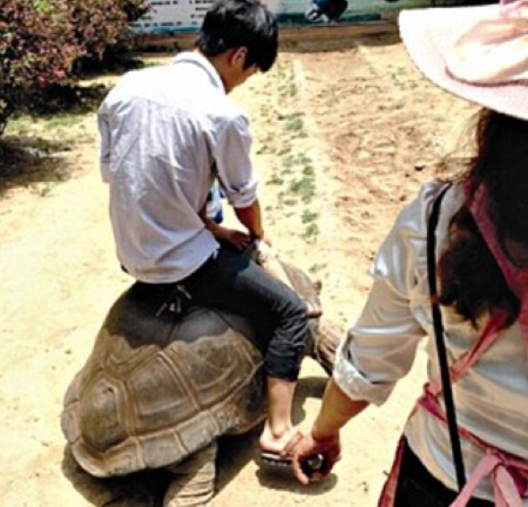 Zookeeper sacked after tourists ride 69-year-old tortoise