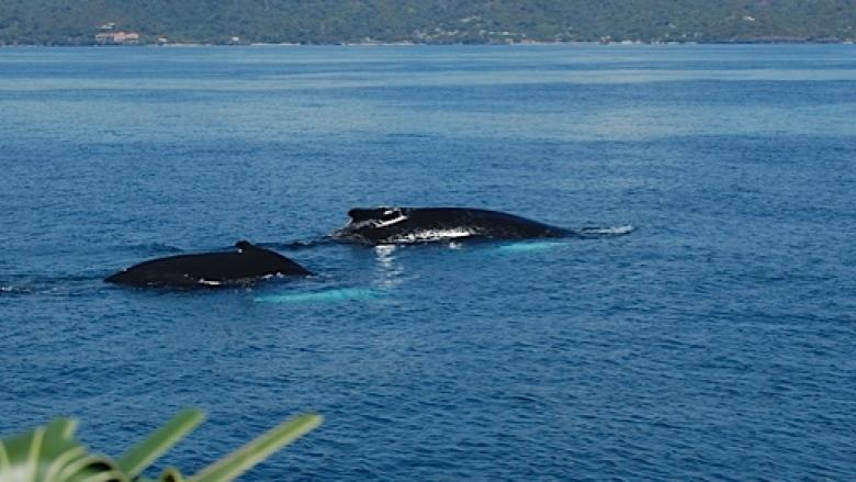 Where do humpback whales spend their winters?