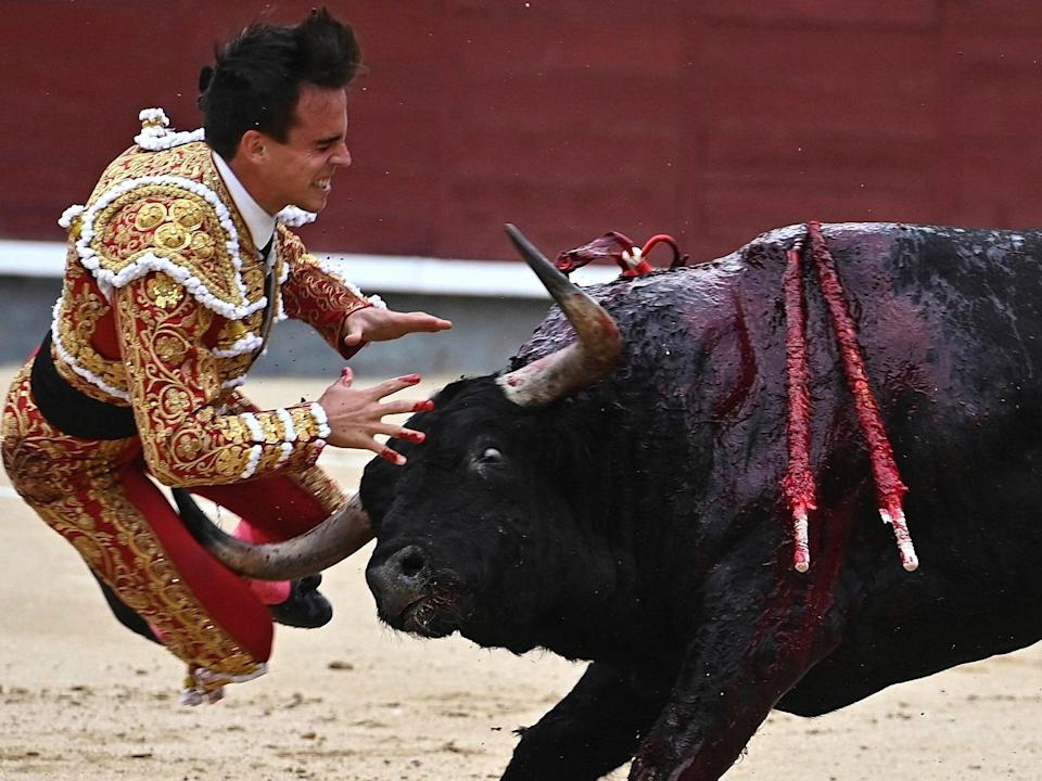 Spanish bullfighter Gonzalo Caballero is charged by a bull during a bullfight on the occasion of the Spanish National Day at Las Ventas bullring: EPA