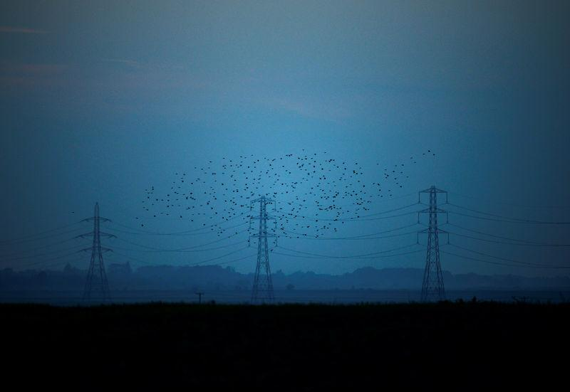 Migrating starlings fly at dusk past electricity pylons silhouetted by the sunset of a clear autumn evening in the Kent countryside, in Graveney, Britain