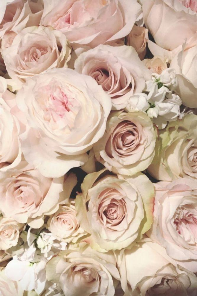 Pink roses posted to Khloé Kardashian's Instagram Story