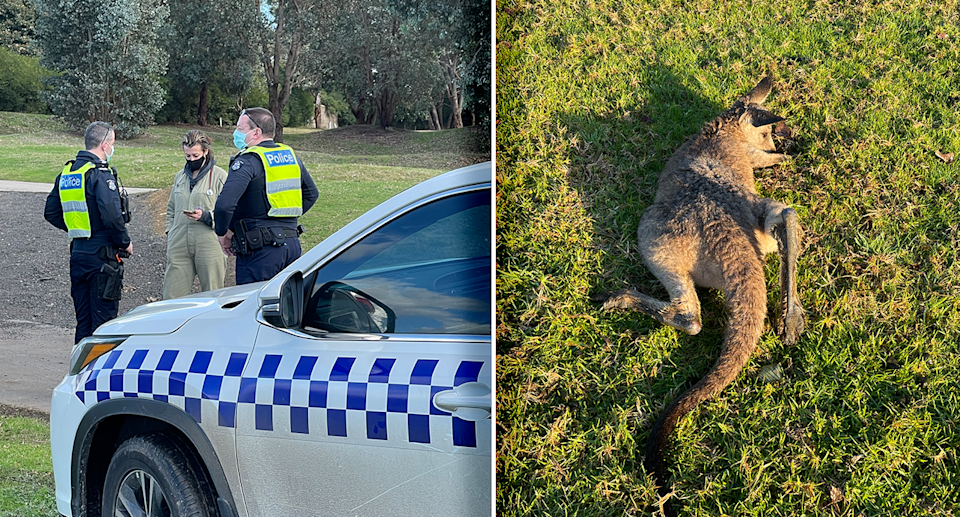 Police were called after eight dead and injured kangaroo were found at the golf course. Supplied