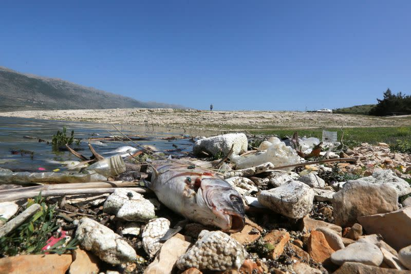 A dead fish is seen at the shore of Lake Qaraoun on the Litani River