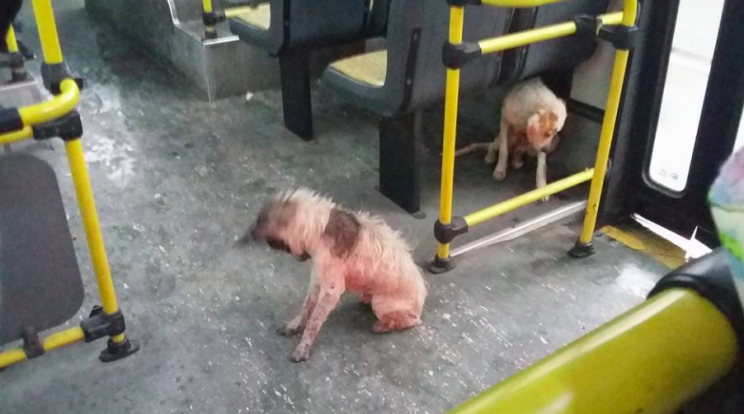The dogs were kept dry on board the bus (Facebook/Carina Barbosa)