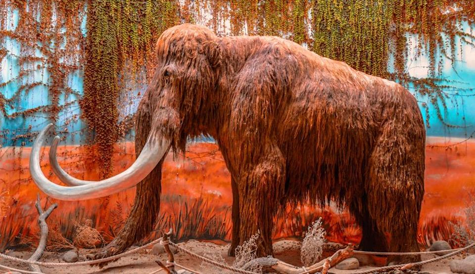 """We tend to think of woolly mammoths as ancient creatures who roamed the Earth long before humans hit the scene. But the fact is, these giant <a href=""""https://www.bbc.co.uk/programmes/articles/1XkbKQwt49MpxWpsJ2zpfQk/13-mammoth-facts-about-mammoths"""" rel=""""nofollow noopener"""" target=""""_blank"""" data-ylk=""""slk:animals were still around when the Great Pyramid of Giza was built"""" class=""""link rapid-noclick-resp"""">animals were still around when the Great Pyramid of Giza was built</a>, around 2580 to 2560 BC. The last woolly mammoths disappeared from Wrangel Island in the Russian territory of the Arctic Ocean just 4,000 years ago, according to the BBC."""