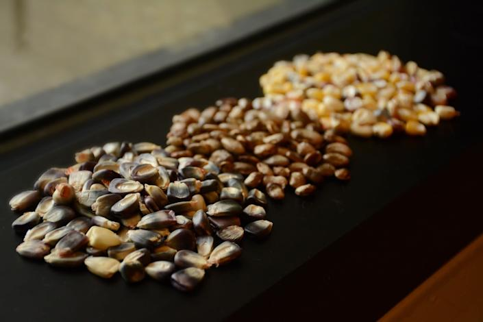 Cherokee Nation seeds destined for the Svalbard Global Seed Vault. (Photo: Cherokee Nation)