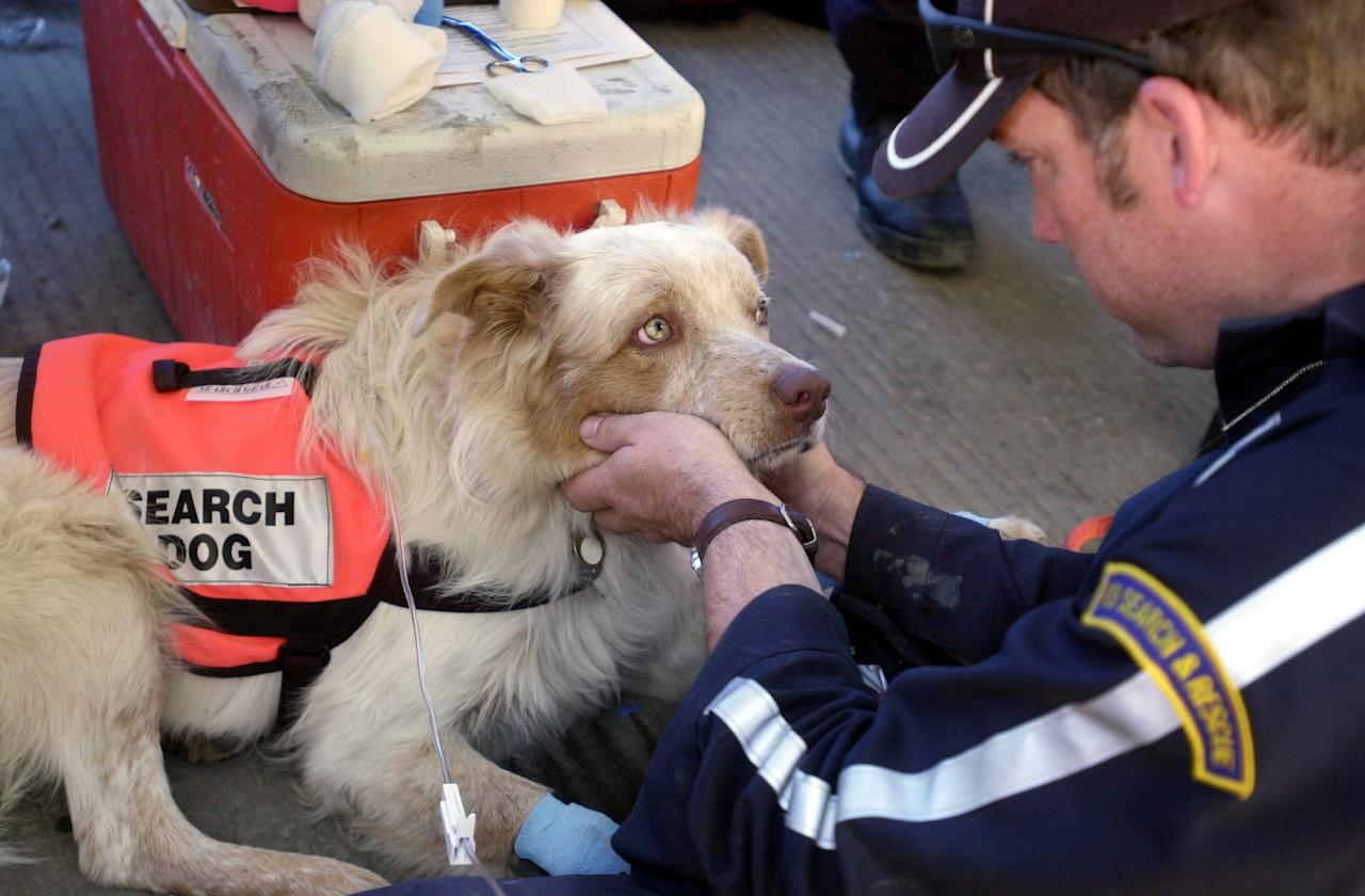 Erick Robertson, of Oakhurst, Calif., pets Porkchop, a one-year-old search and rescue dog as he receives a dehydration intravenous treatment, Wednesday, Sept. 19, 2001, at the Society for the Prevention of Cruelty to Animals mobile clinic just outside ground zero in New York. Robertson and Porkchop have been working at the World Trade Center attack site since Sunday. (AP Photo/Suzanne Plunkett)