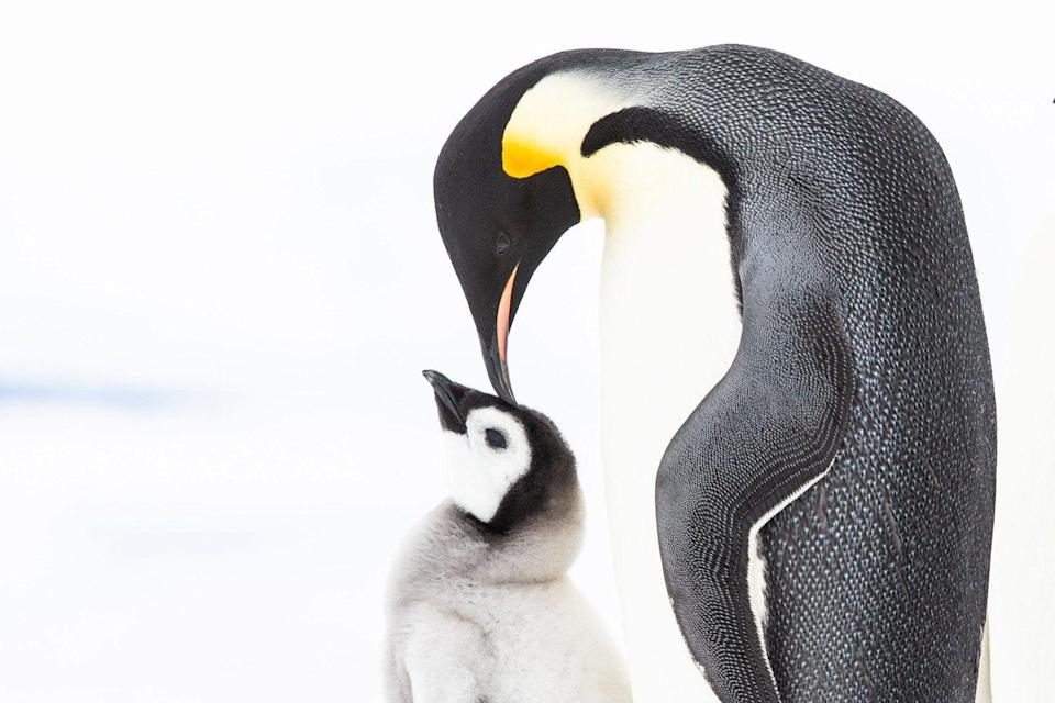 <p>Which will be your favourite penguin?</p>BBC
