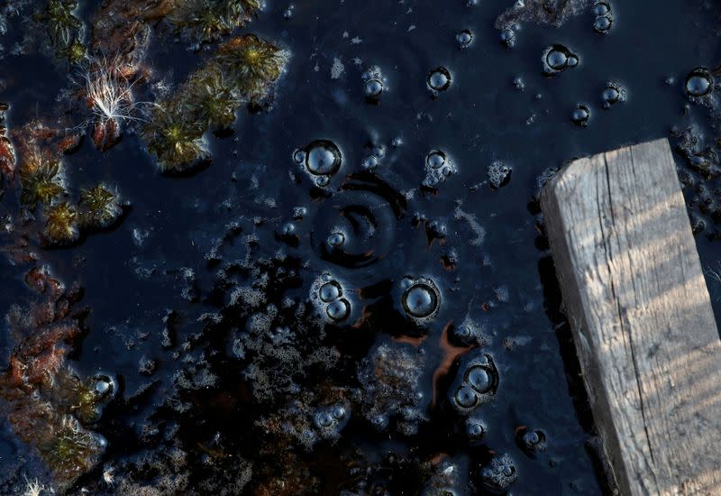FILE PHOTO: Methane bubbles are seen in an area of marshland at a research post at Stordalen Mire near Abisko