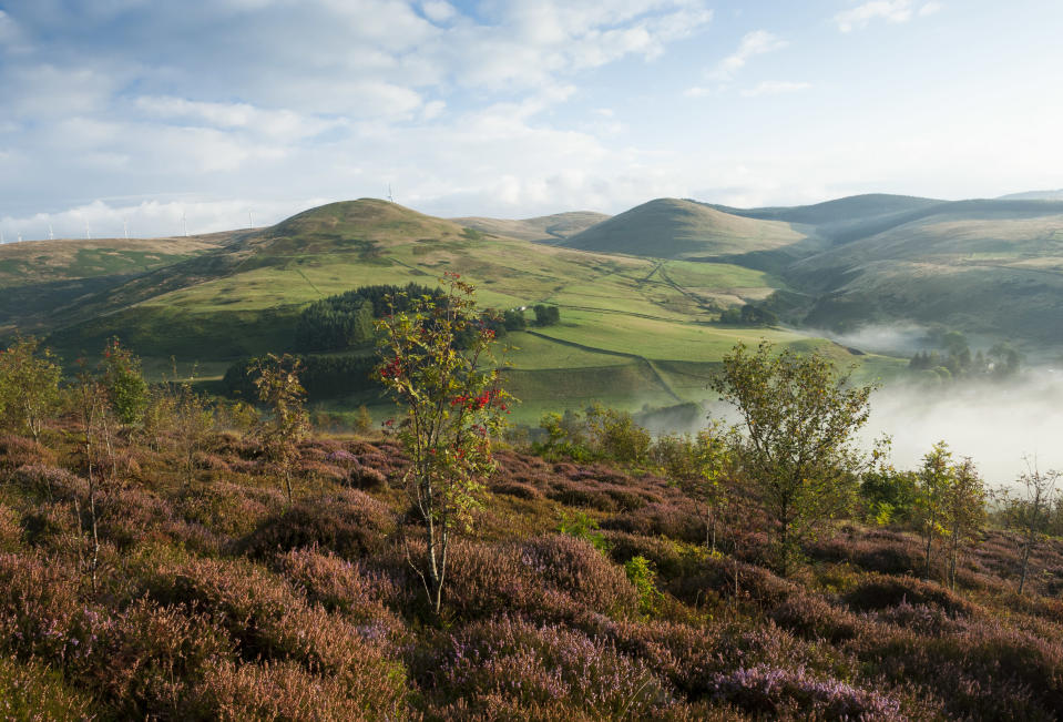 New trees in the landscape in Perthshire, Scotland