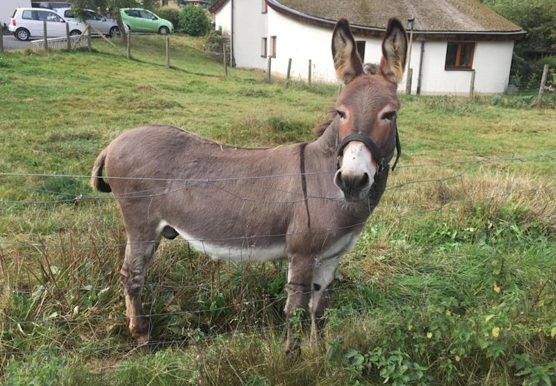 The undated photo provided by Hit Radio FFH shows donkey 'Vitus' on his meadow in Schlitz, central Germany. The owner of a pricy McLaren sports car is in court to try to get a donkey owner to pony up for an alleged 5,000 euros (US$ 5,876) in damage caused when the animal chomped the backside of the vehicle. (Hit Radio FFH/dpa via AP) Mandatory Credit