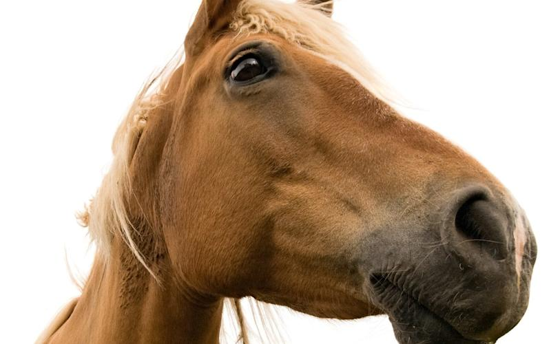 More than just hygiene - snorting has baffled horsemen for millennia - Getty Images Contributor