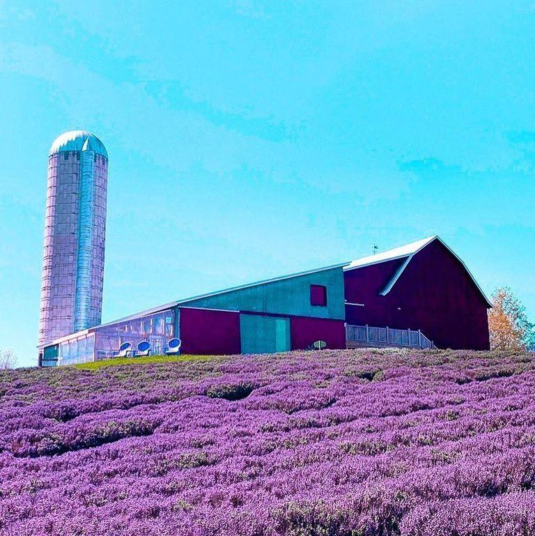 "<p>From a legendary castle to mushroom houses to a stunning red lighthouse, the <a href=""https://www.visitcharlevoix.com/"" target=""_blank"">small town of Charlevoix</a> has plenty to offer. And if you're a fan of all things lavender, this is the ideal destination for you—Charlevoix is home to one of the largest <a href=""https://lavenderhillfarm.com/our-story/"" target=""_blank"">Lavender Hill Farms</a>, abundant with 25 varieties.</p>"