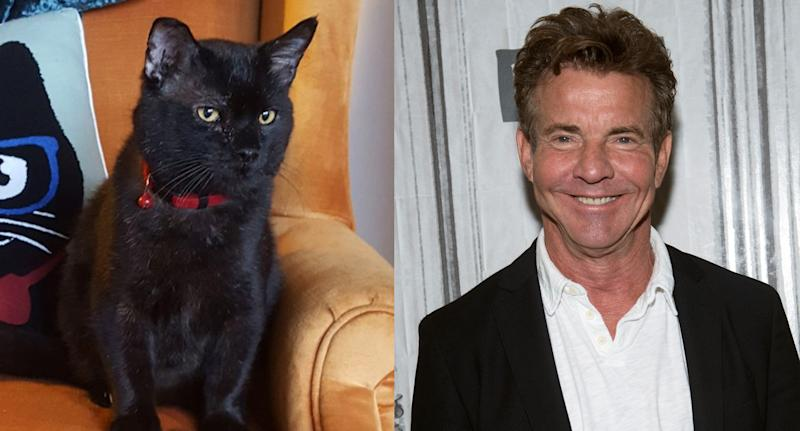 Dennis Quaid the human has adopted Dennis Quaid the cat. (Facebook/Lynchburg Humane Society. Debra L Rothenberg/Getty Images)