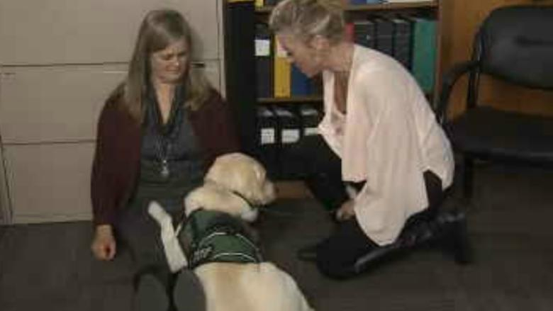 Dandy the trauma dog makes victims of tragedy feel better, 1 cuddle at a time