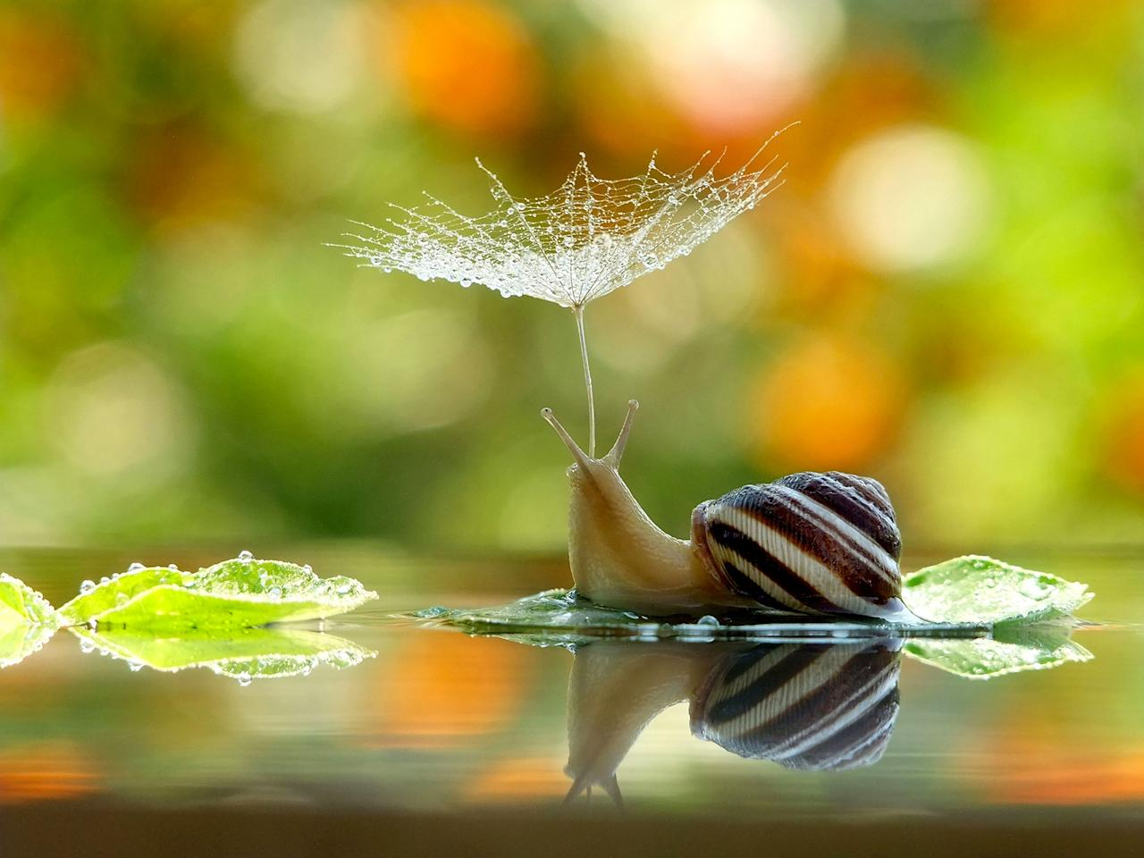 <p>Taking cover: The snail covered by the flower (Caters)</p>