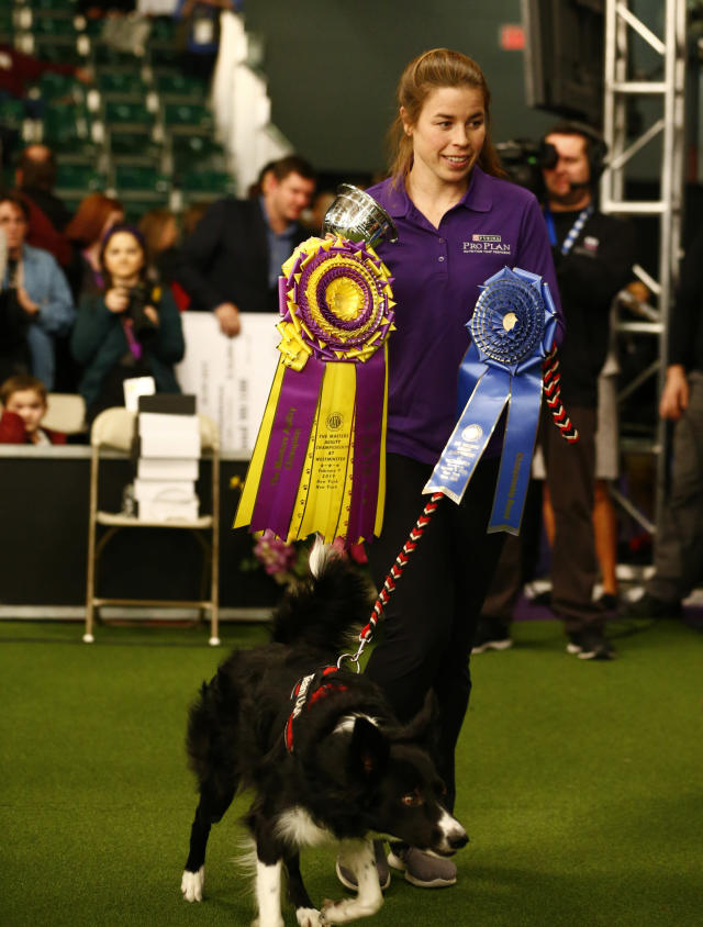 """Perry DeWitt stands with her border collie """"Verb"""" after winning the overall competition in the masters agility championship during the Westminster Kennel Club Dog Show, Saturday, Feb. 9, 2019, in New York. (AP Photo/Noah K. Murray)"""