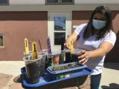This May 4, 2021 image shows development director Ashley Martinez examining germinating seeds that were planted by students at Cuidando Los Ninos in Albuquerque, N.M. The charity provides housing, child care and financial counseling for mothers, all of whom will benefit from expanded Child Tax Credit payments that will start flowing in July to roughly 39 million households. (AP Photo/Susan Montoya Bryan)