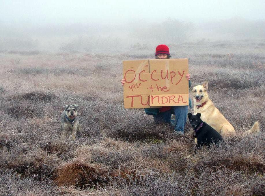 "In an Oct. 9, 2011 photo, Diane McEachern sits with her dogs Mr. Snickers, left, Seabiscuit, and Ruffian, right, on the tundra near Bethel, Alaska. McEachern wanted to participate in the Occupy Wall Street protests so she gathered her dogs, bundled up and went out to the tundra with a homemade sign that read ""Occupy the Tundra."" The photo was posted on the Occupy Wall Street Facebook page and has since been shared thousands of times. (AP Photo/Courtesy of Diane McEachern)"