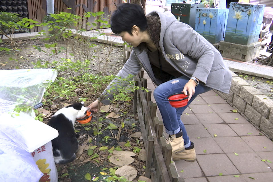 """In this image from video, Taiwanese math teacher Hung Pei-ling prepares to feed a stray cat in Taipei, Taiwan, on Dec 20, 2020. Stray cats in Taipei recently got an upgrade in their dining situation with a """"Midnight Cafeteria."""" Launched in September, the """"cafeteria"""" is actually 45 small wooden houses painted by Taiwanese artists and scattered across Taipei. The idea is to give the cats a place to rest while making feeding them less messy. (AP Photo/Huizhong Wu)"""
