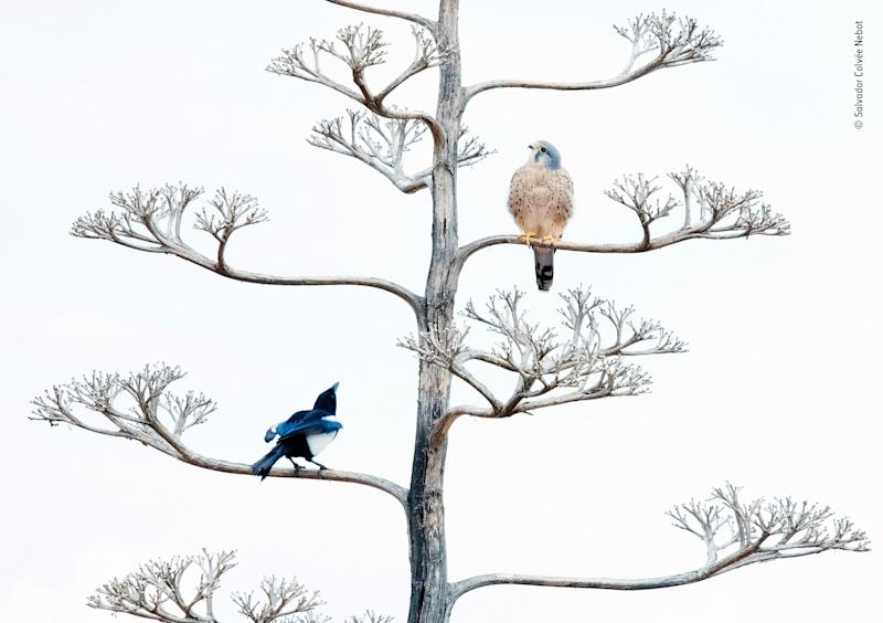 © Salvador Colvée Nebot Wildlife Photographer of the Year