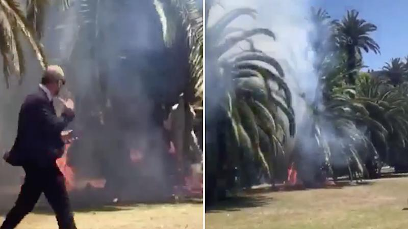 Pedestrians are seen walking pas the palm tree as it burns. Source: Snapchat